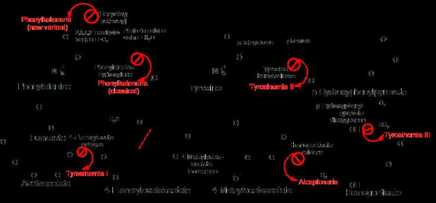 Pathophysiology_of_metabolic_disorders_of_phenylalanine_and_tyrosine